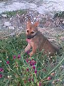 我家的狗 來寶 成長錄:11.2009年7月10日