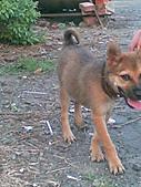 我家的狗 來寶 成長錄:12.2009年7月10日