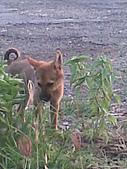我家的狗 來寶 成長錄:13.2009年7月10日