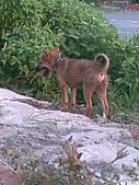 我家的狗 來寶 成長錄:15.2009年7月10日