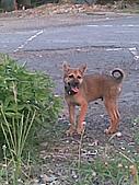 我家的狗 來寶 成長錄:16.2009年7月10日