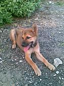 我家的狗 來寶 成長錄:19.2009年7月10日