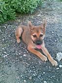 我家的狗 來寶 成長錄:20.2009年7月10日