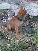 我家的狗 來寶 成長錄:21.2009年7月10日