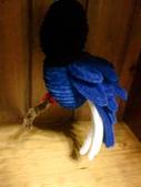 ~台灣藍鵲~:CIMG6748.JPG