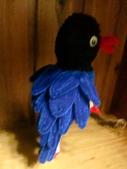 ~台灣藍鵲~:CIMG6750.JPG