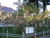 福壽山:照片 080.jpg