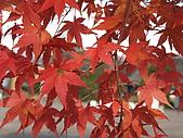 97年日本東北-盛岡手工村:IMG_0370.JPG
