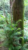 生態-植物:WP_20180901_023.jpg