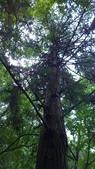 生態-植物:WP_20180901_028.jpg