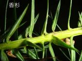 生態-植物:DSC09812.JPG