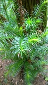 生態-植物:WP_20180901_027.jpg