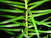 生態-植物:香彬 (2).JPG