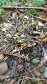 生態-植物:WP_20180901_024.jpg