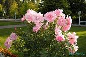 2009 奧地利 & 捷克 相本 4:瑪麗安斯凱蘭澤 大公園 玫瑰花.jpg