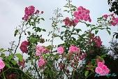 2009 奧地利& 捷克 相本 6:米貝拉花園 (5).jpg