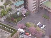 2006 Japan:DSC04758_resize.jpg