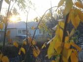 New Homestay in Toronto:DSC08581_resize.JPG