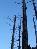 2011-0916~18水漾森林:DSCN0181