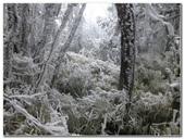 2012-1231蘭陽第一高山阿玉山:P1020444.jpg