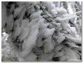 2012-1231蘭陽第一高山阿玉山:P1020436.jpg