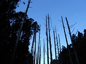 2011-0916~18水漾森林:DSCN0189