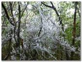 2012-1231蘭陽第一高山阿玉山:P1020388.jpg