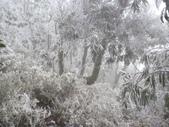2012-1231蘭陽第一高山阿玉山:P1150782.jpg
