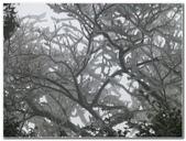 2012-1231蘭陽第一高山阿玉山:P1020421.jpg