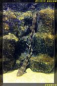 澎湖水族館:IMG_21.jpg
