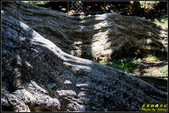 墾丁森林遊樂區‧地質與生態奇景:IMG_18.jpg