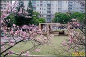 新竹麗池公園.賞櫻記:IMG_04.jpg
