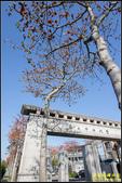 中央大學木棉大道:IMG_03.jpg
