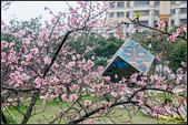 新竹麗池公園.賞櫻記:IMG_05.jpg
