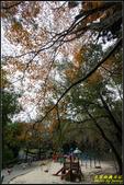 辭修公園楓紅:IMG_14.jpg