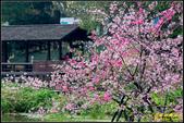 新竹麗池公園.賞櫻記:IMG_21.jpg