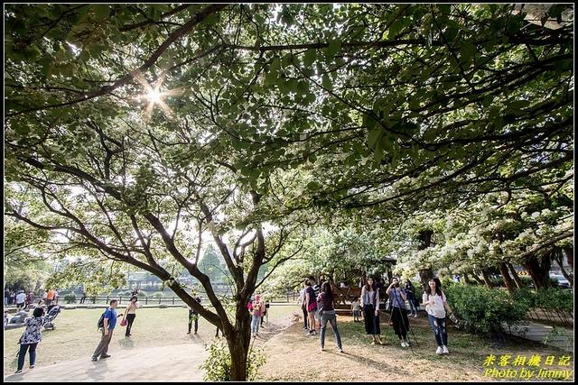 IMG_13.jpg - 龜山大湖紀念公園‧紫藤流蘇齊綻放