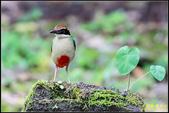 三星龍泉步道‧八色鳥現身:IMG_15.jpg