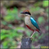 三星龍泉步道‧八色鳥現身:IMG_16.jpg