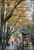虎頭山公園楓葉:IMG_05.jpg