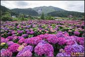 大賞園繡球花:IMG_21.jpg