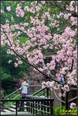 新竹麗池公園.賞櫻記:IMG_18.jpg