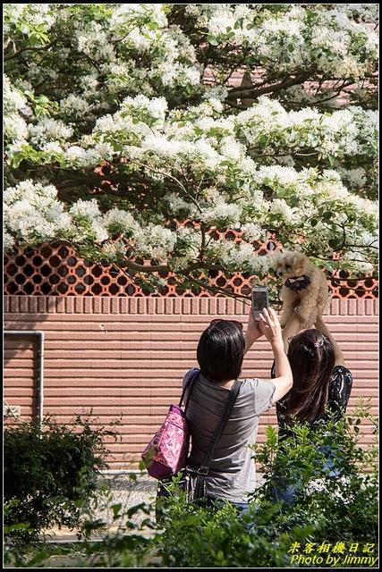 IMG_12.jpg - 龜山大湖紀念公園‧紫藤流蘇齊綻放