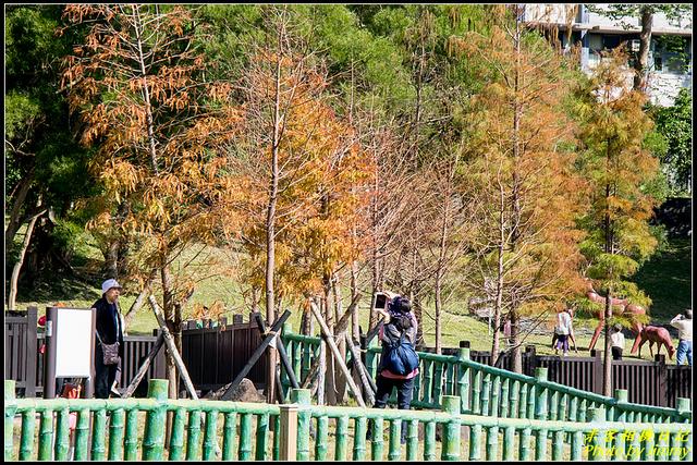 IMG_09.jpg - 原住民文化主題公園落羽松