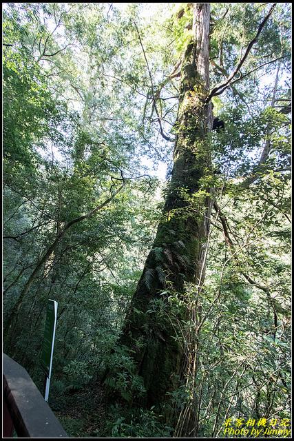 IMG_32.jpg - 拉拉山自然保護區