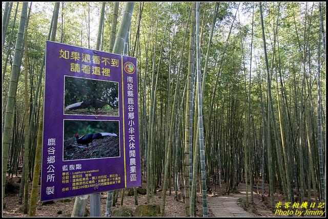 IMG_12.jpg - 長源圳生態步道、孟宗竹林古戰場