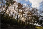 虎頭山公園楓葉:IMG_02.jpg