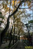 虎頭山公園楓葉:IMG_04.jpg