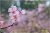新竹麗池公園.賞櫻記:IMG_07.jpg