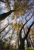 虎頭山公園楓葉:IMG_09.jpg